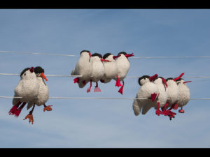 Birds on a Line, by Dave Bibby