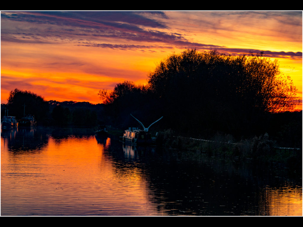 Slimbridge Sunset, by Tracy Kuxhaus