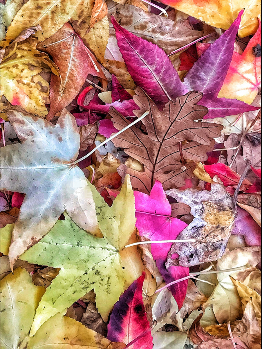Fallen Leaves, by Nicki Greenwood