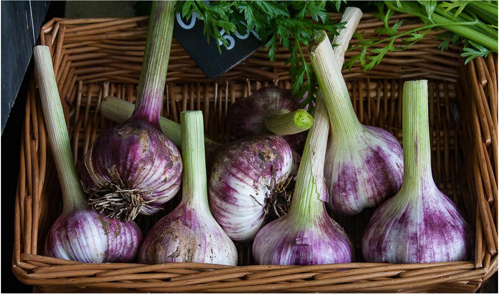 Basket of Garlic, by Harry Kuxhaus